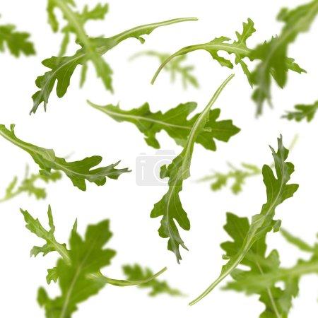 Photo pour Feuilles de rucola volantes isolées sur fond blanc. Concept de saine alimentation et de cuisine végétariennes - image libre de droit
