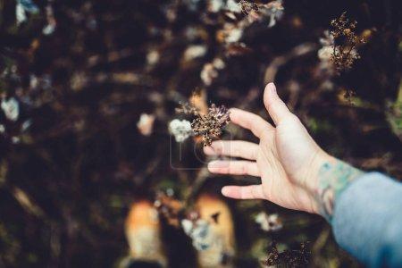 Photo pour Toucher à la main les fleurs et les plantes sur la vallée de montagne pendant la journée, Vik, Islande du Sud - image libre de droit