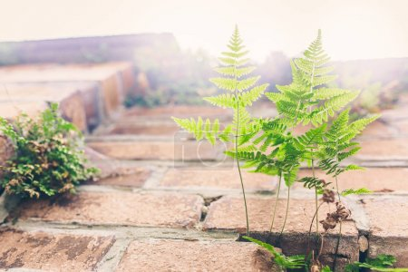ferns growing in bricks wall