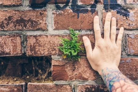 ferns growing in bricks