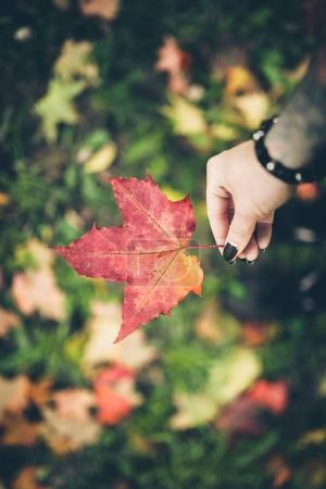 hand holding red leaf