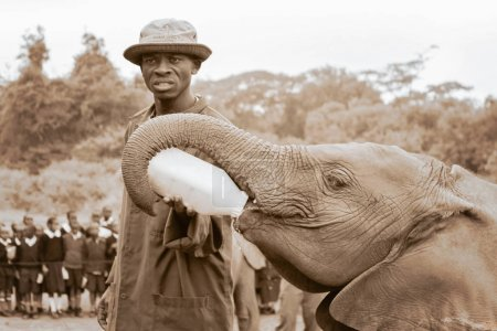 adult male african guardian holding milk bottle and feeding a baby elephant, sepia color