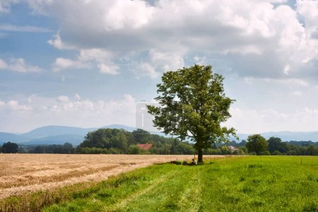 Rural landscape cyclist rest under