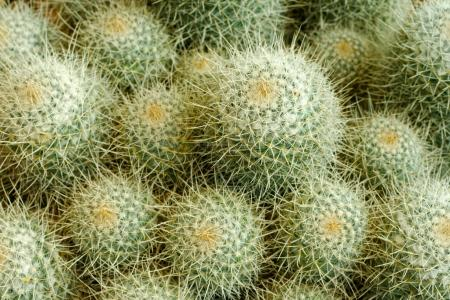Cactus pattern, close-up shot