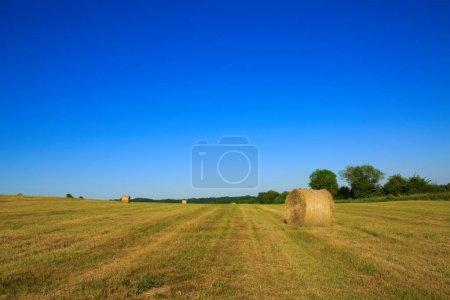 Photo pour Champ agricole avec ciel bleu et balles de foin. Paysage nature d'été . - image libre de droit