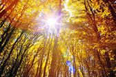 Sunlight in the autumn forest.