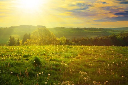 Photo for Green meadow under sky with clouds and sunset. - Royalty Free Image
