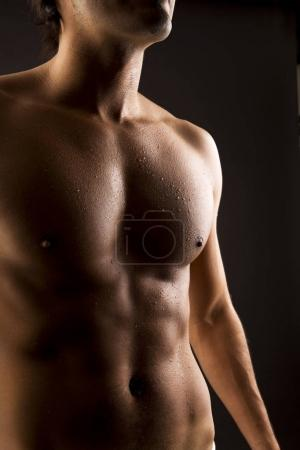 shirtless muscular male body