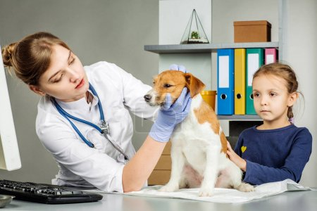 Veterinarian checking up sick dog with stethoscope