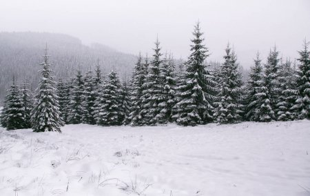 Winter forest in snow. Mountain landscape with a f...