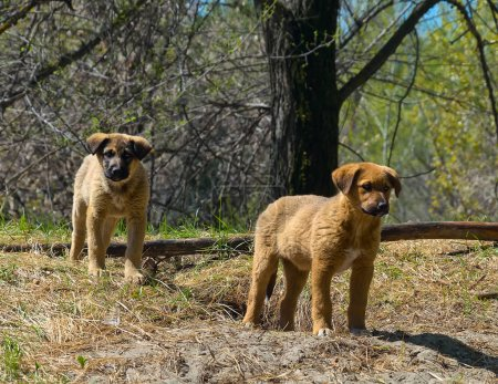 Puppies of a stray dog next to a hole in a wild park