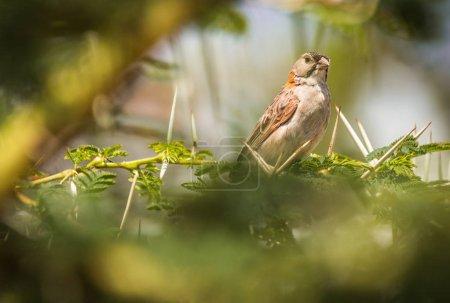 Small bird on  branch in Masai Mara, Kenya