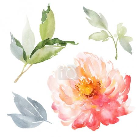 Photo for Set of watercolor large peony for greeting card. - Royalty Free Image