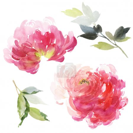 Set of watercolor large peony for greeting card.