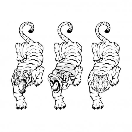 Tigers set, isolated on white background