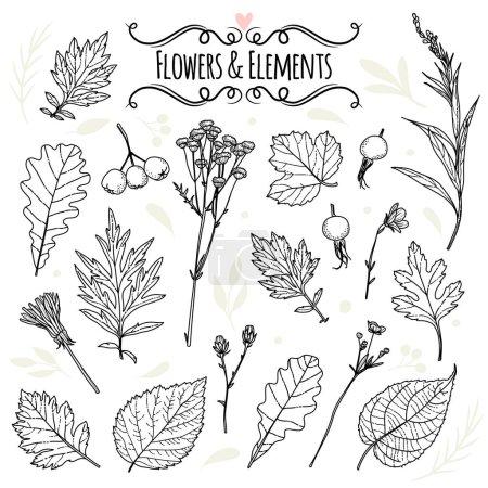 Illustration pour Ensemble d'illustrations de plantes. Croquis. Dessin à main levée - image libre de droit