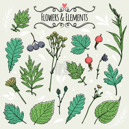 Set of illustrations of plants.