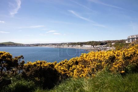 Flowering gorse overlooking Douglas Isle of Man