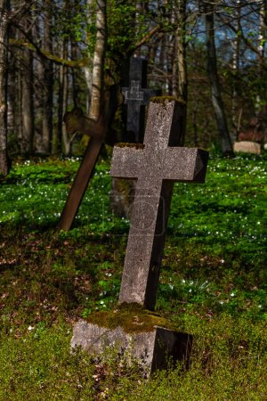 Photo for Old crosses in green forest - Royalty Free Image