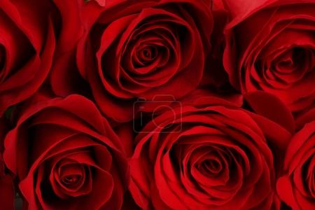 Bouquet of red roses background