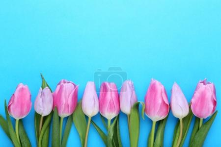 Bouquet of tulips on blue background
