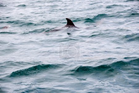 Dolphin in the sea waves
