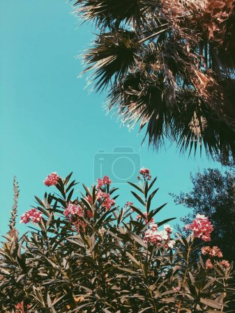 Tropical palm and flowers