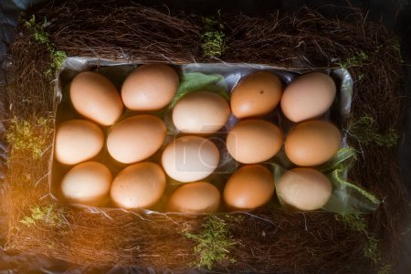Photo for Chicken eggs in nest. Easter concept - Royalty Free Image