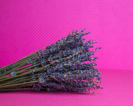 Photo pour Photo of a bouquet of dried blue lavender on a pink background front view. - image libre de droit