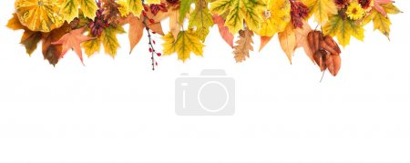 Autumn Concept: Border of Maple and Oak Leaves, Re...