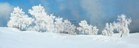 Photo pour Paysage d'hiver féerique: Neige arbres couverts de givre sur une prairie blanche recouverte de neige avec un ciel bleu - image libre de droit