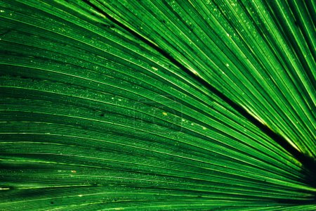 amazing beautiful fresh green leaf