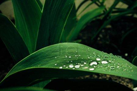 Amazing beautiful drops