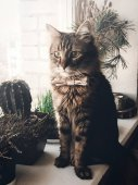 cute cat in bow tie sitting on window sill. space for text.
