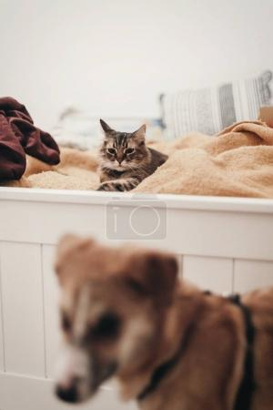 cute cat resting on yellow bed in stylish room with dog, space