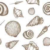 shells pattern 01