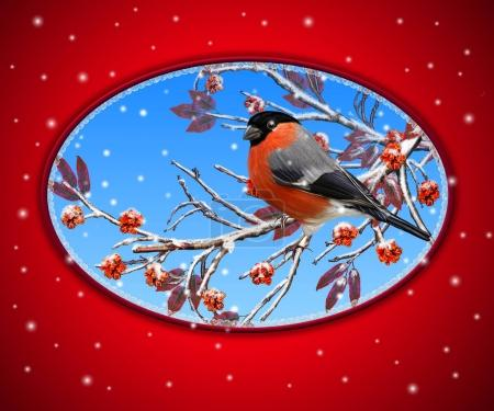 Photo for Christmas greeting card. Two bright bird bullfinch bird sitting on a branch, snow, red berries. - Royalty Free Image
