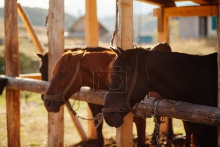 beautiful horses in stall