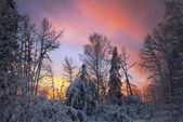 winter forest at sunset