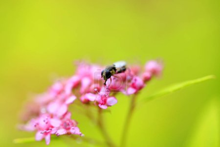 A fly is in the flower, close-up lens...