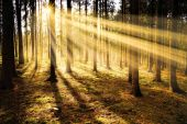 Sunny forest early in the morning. Sunrise sunlight rays nature background Autimn seasonal atmosphere concept.