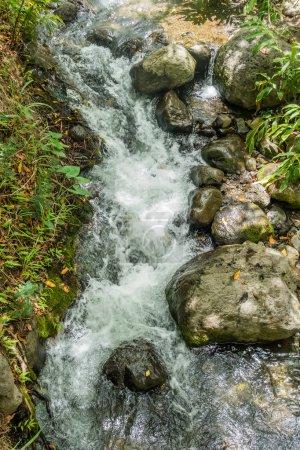 Iao River Closeup 4
