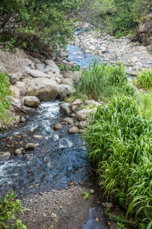 Iao River Closeup 6