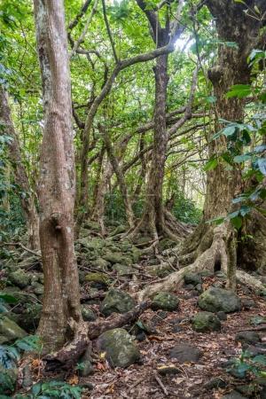 Iao Valley Trees