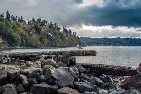 Seagull Shoreline Landscape