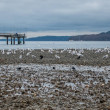 Seagulls line the shore at low tide in Des Moines,...