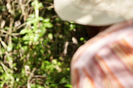 ecologist working in tropical forest