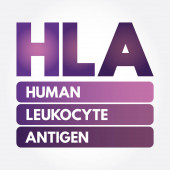 HLA - Human Leukocyte Antigen acronym