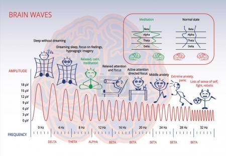 Electromagnetic spectrum of a brain infographic