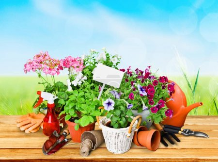 Flowers and potted plants